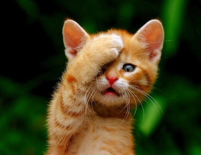 An orange kitten with his paw over his forehead.